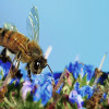 The Bee's Vanishing Act