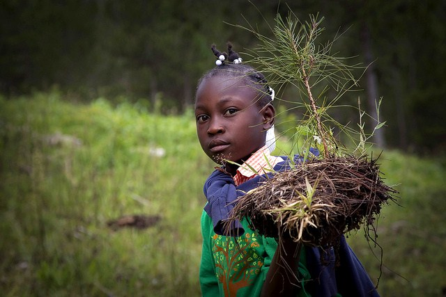 Haitian Students Breathe New Life into Depleted Pine Forest