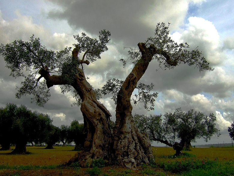 Is the Biotech Industry Behind the Destruction of Italy's Olive
